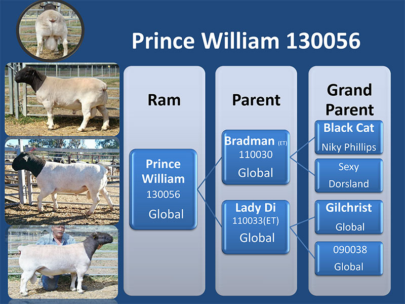 Prince William 130056
