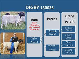 Digby-130033
