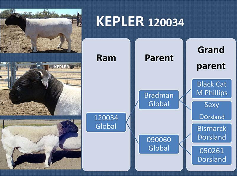 Kepler - 120034