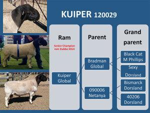 Kuiper-120029