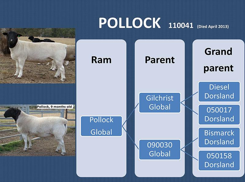 Pollock - 110041