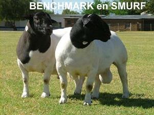 Benchmark & Smurf