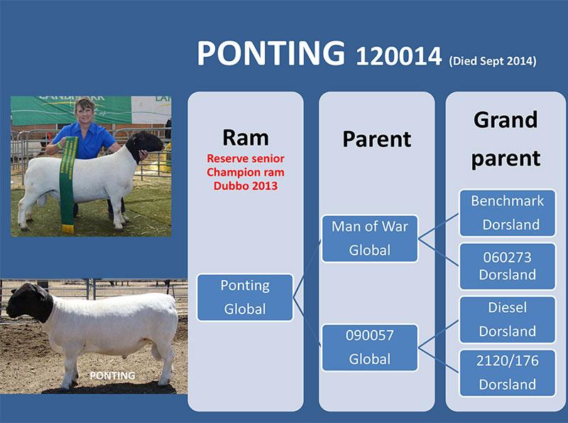 Ponting 120014